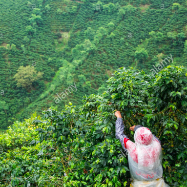 Como funciona el mercado del café. Visita a Colombia
